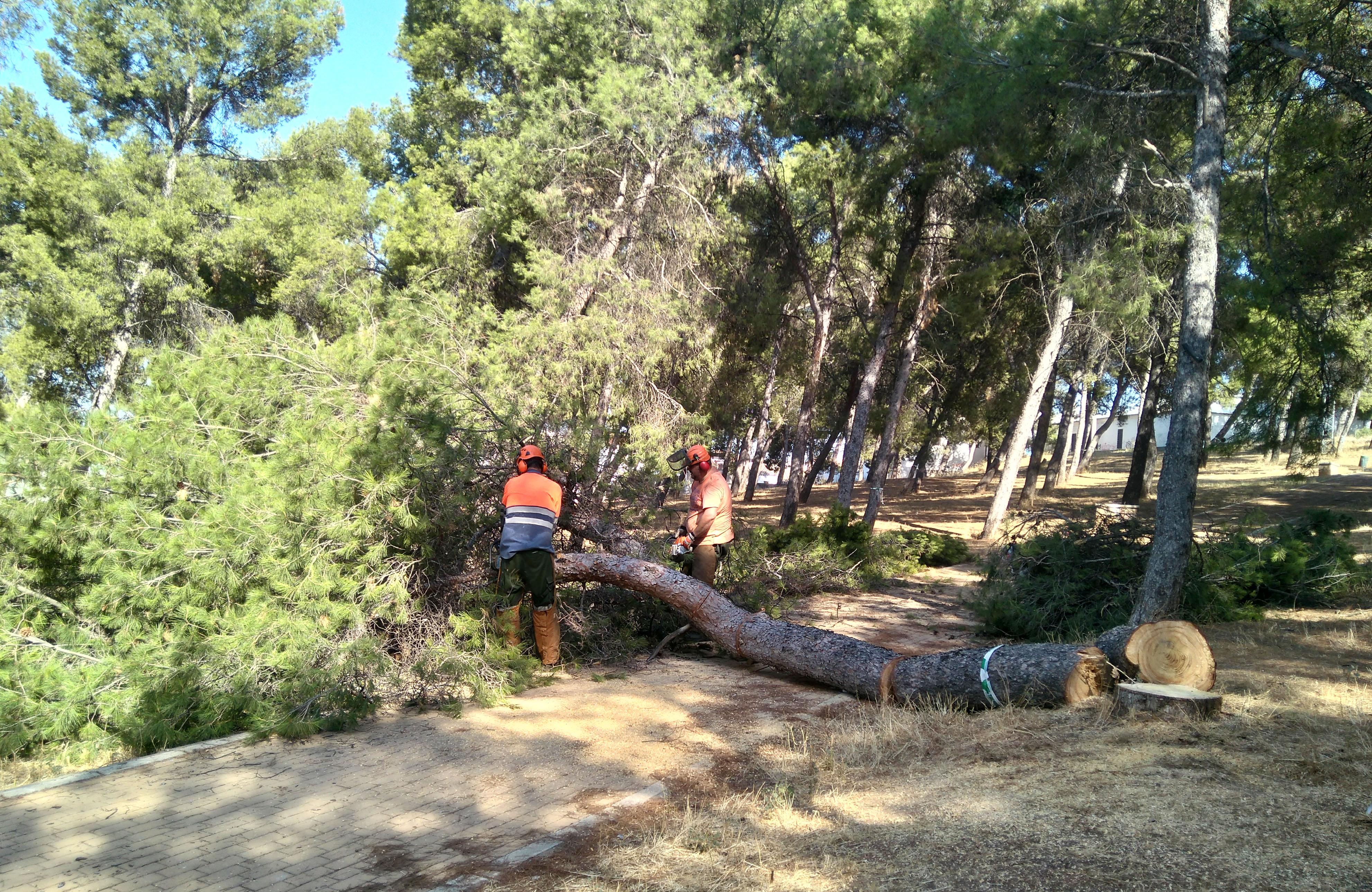 Actuacíón en el pinar de San Rafael