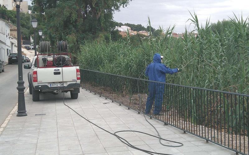 Trabajos en el cañaveral de Río de Oro
