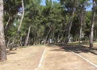 Culminan las obras de mejora del Pinar de San Rafael en el Parque de Los Pinos